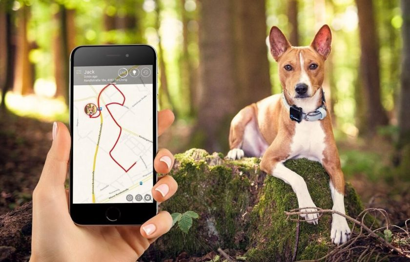JPS Dog Tracker