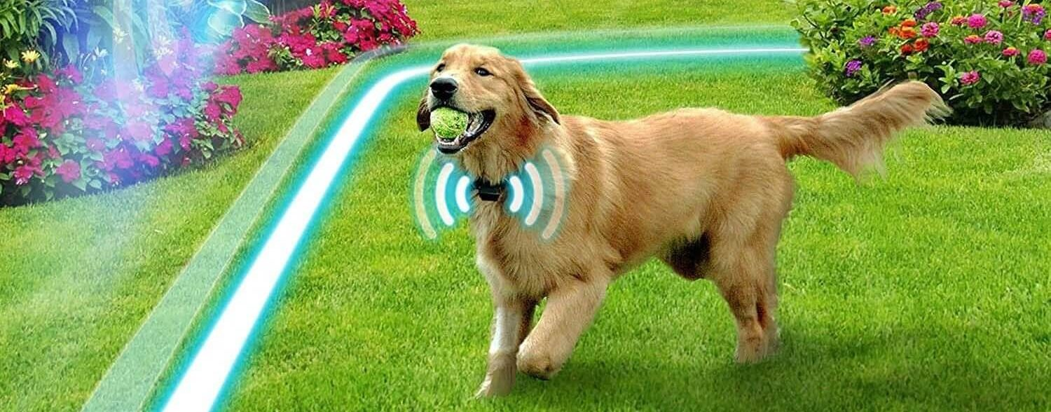 5 Best Wireless Dog Fence Solutions To Keep Your Dog At Home