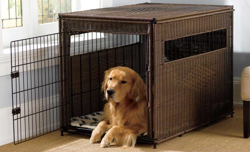 Indoor-and-Outdoor-Dog-Crates
