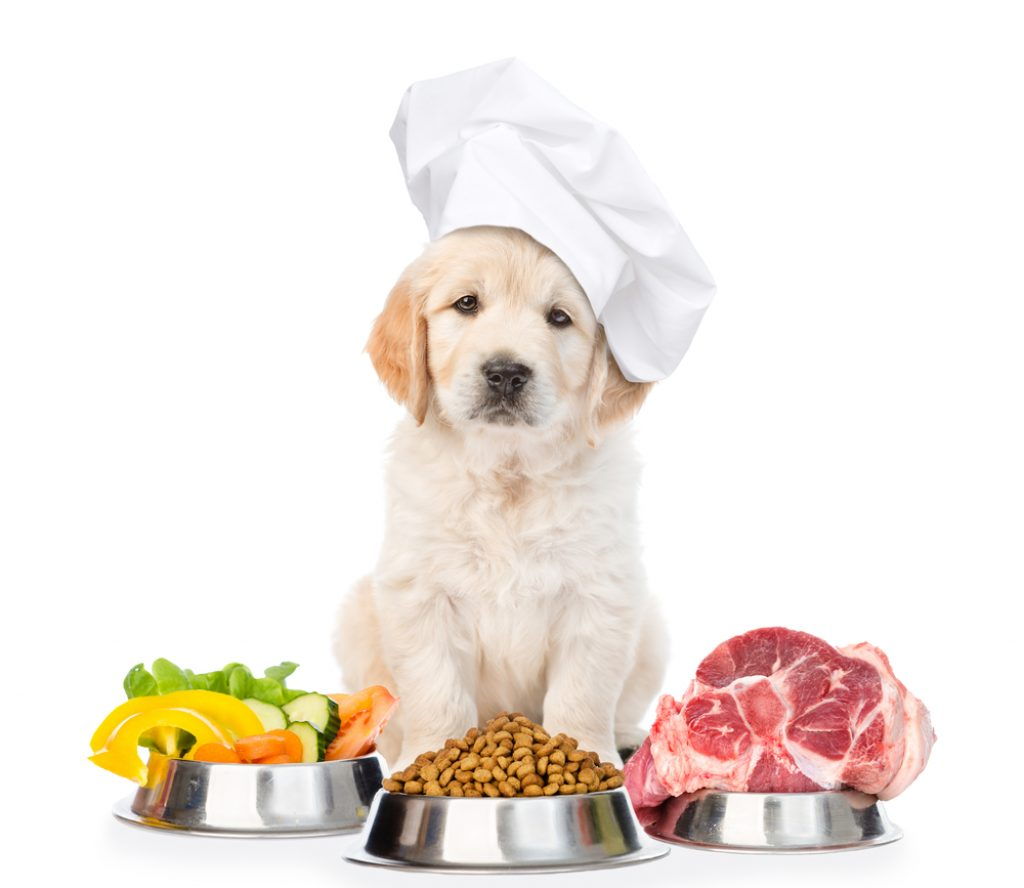 Chef dog with dishes
