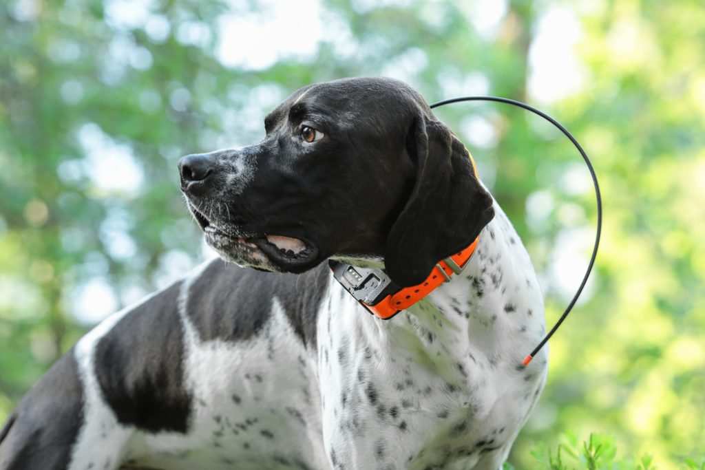 Dog tracker with water resist for huge dog